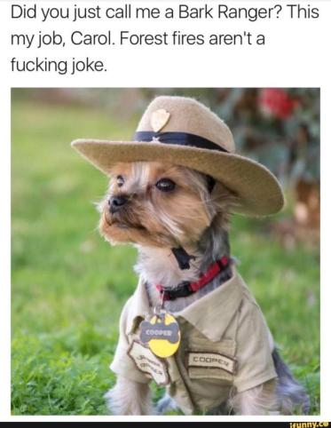 best-damn-photos-forrest-ranger-dog