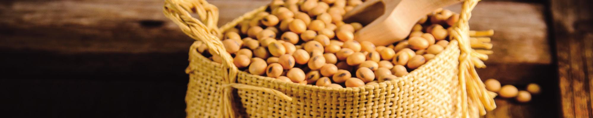 h_soybean2