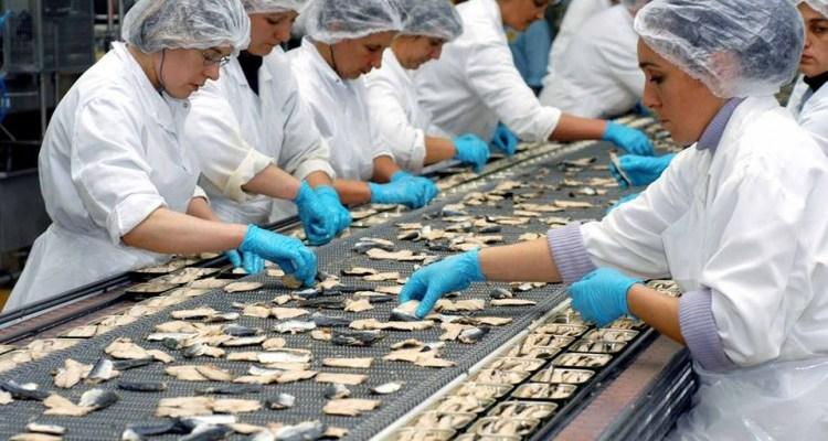 شركة متخصصة في تعليب السمك تعلن عن تشغيل 400 عاملة تنقية وتعليب السمك
