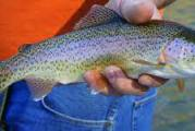 Climate Change Threatening Trout Streams