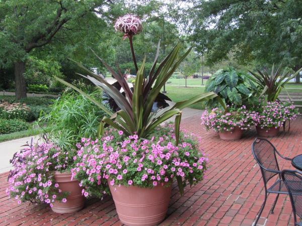 howlett hall entry garden seasonal