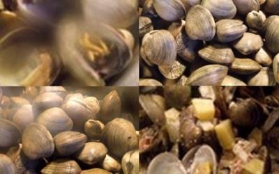 clam showder