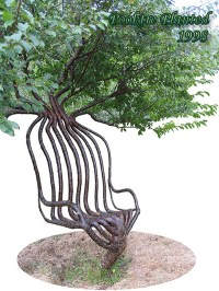 Tree Grown as a Chair by Peter Cook - Chairblog.eu