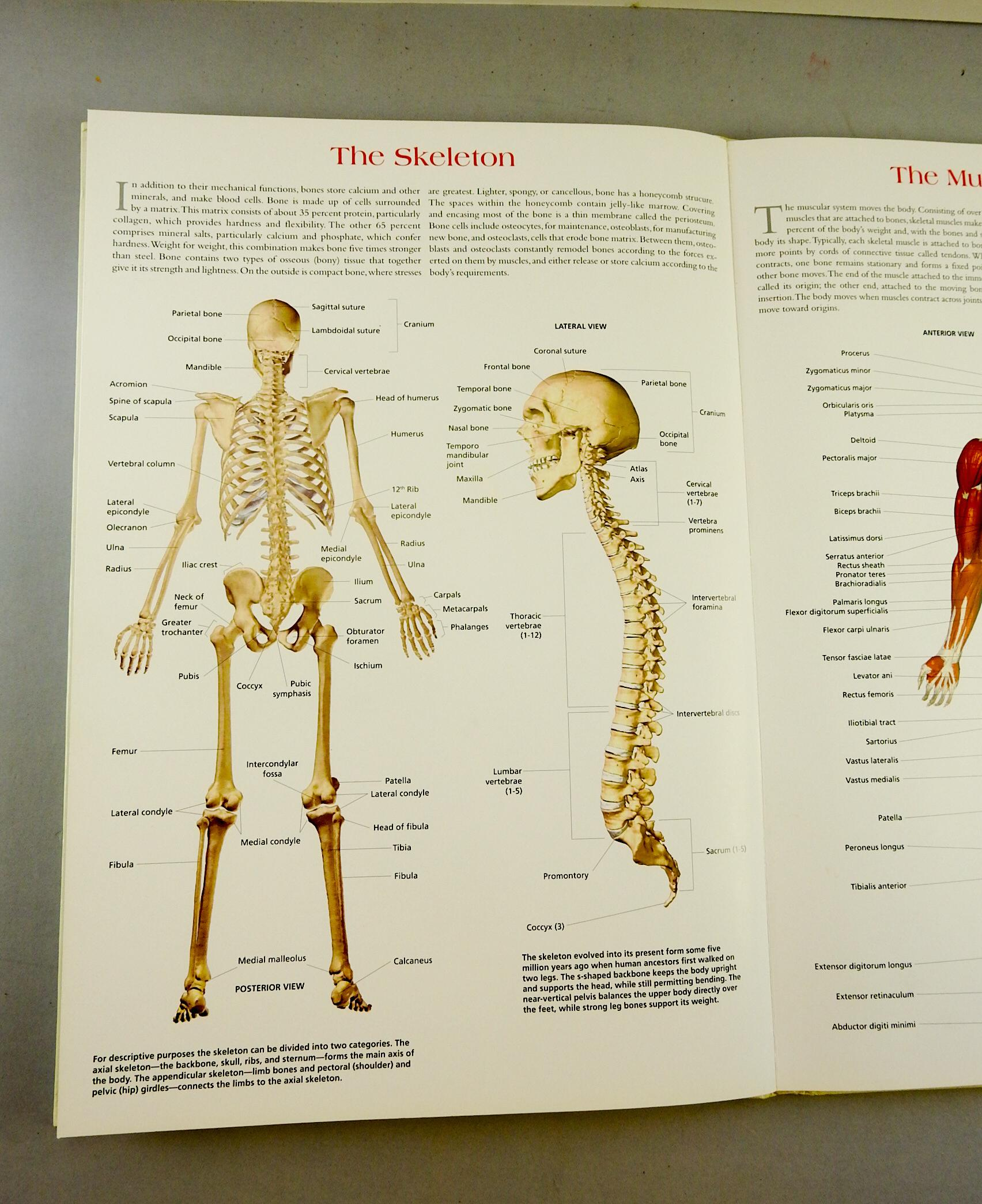 Wallchart of human anatomy book for sale image also chairish rh