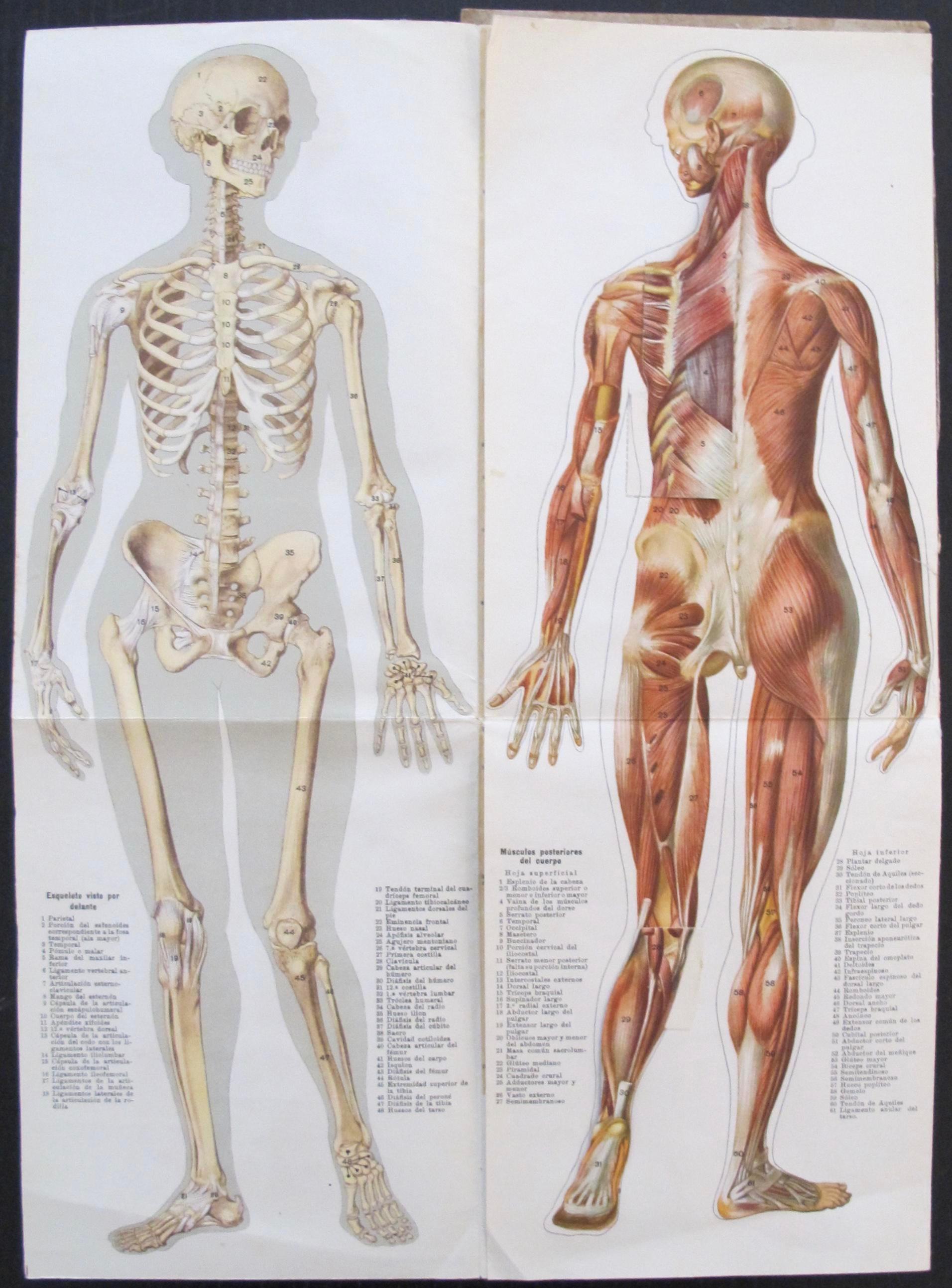 Medical anatomy chart female image of also chairish rh