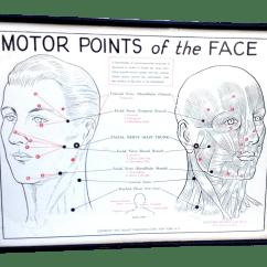 Face Pressure Points Diagram Kazuma 49cc Quad Wiring Facial Nerves Preasure Hot Naked Pics