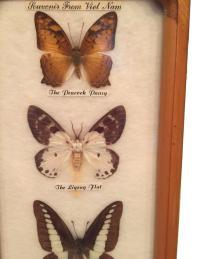Vintage Butterfly Specimen Wall Art | Chairish