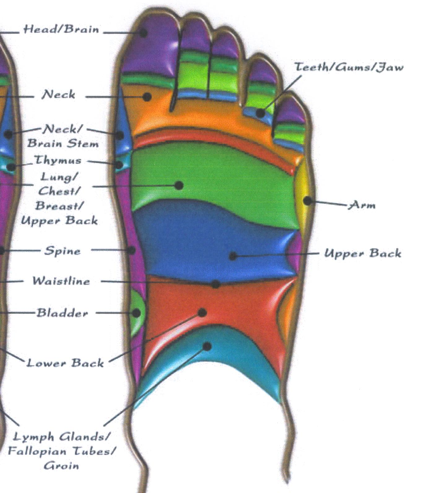 top of foot pain diagram and there labeled microscope parts for what reflexology free engine image