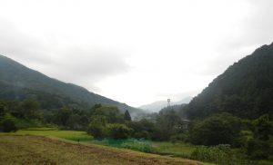 今日は富士山の姿を窺うことはできなかった