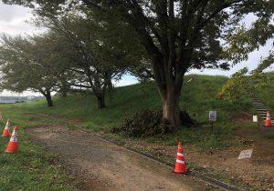 シンボルツリー下の立ち入り禁止場所