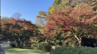 紅葉している久良岐公園の木
