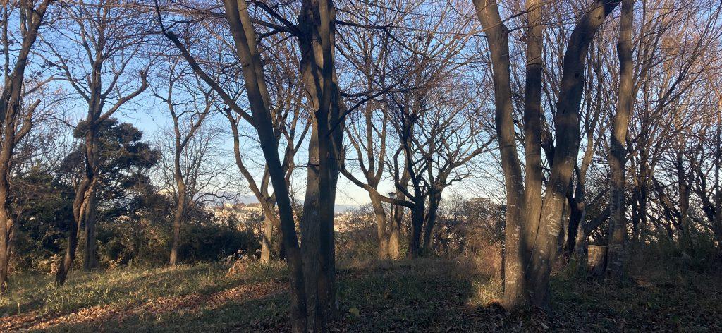 冬枯れの雑木林