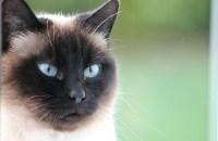 Tout le monde veut devenir un Cat