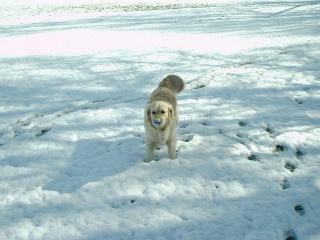 Neve e Pippa