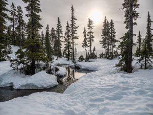 canadianforest