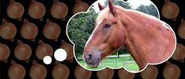 Oπnions: Can a horse have an Erdős number?
