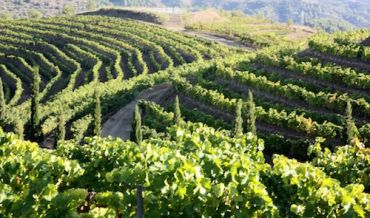 Lovely bubbly down Spain's sparkling Cava trail