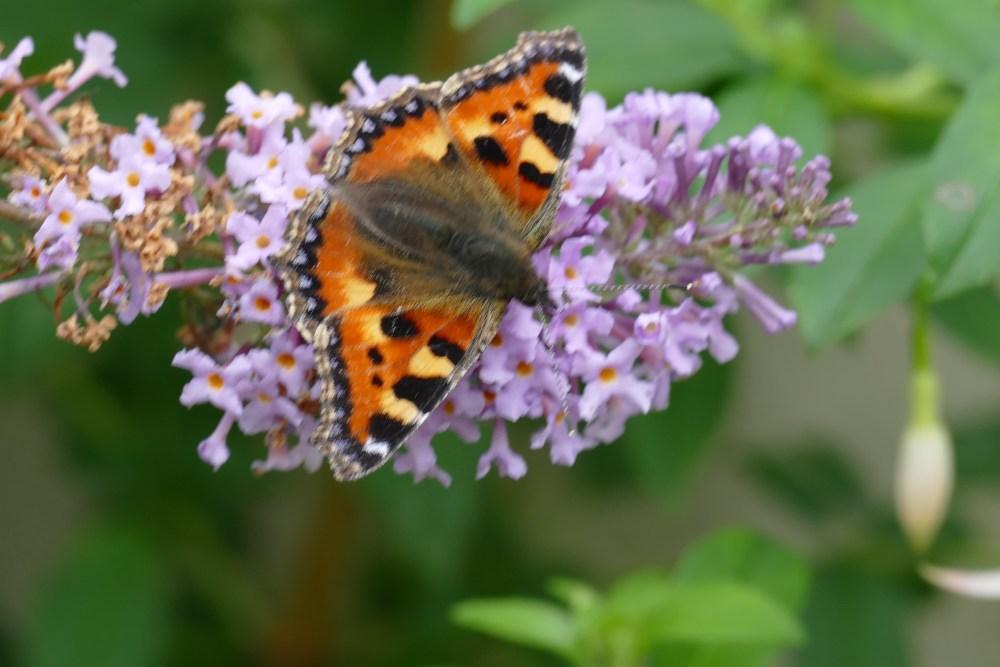 Butterfly Bonanza (3/6)