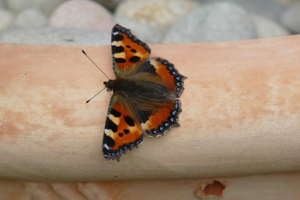 Butterfly Bonanza (4/6)