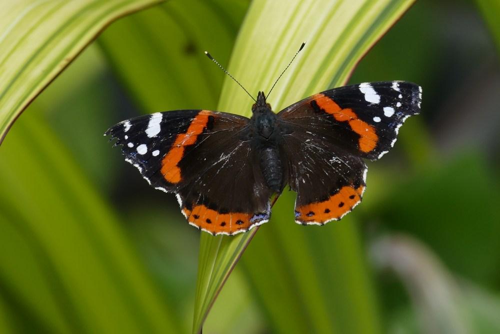 Butterfly Bonanza (5/6)
