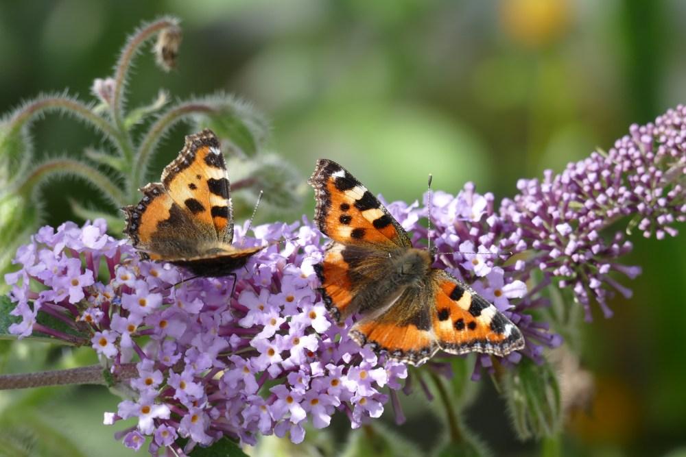 Butterfly Bonanza (1/6)