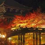 【京都】知恩院の紅葉ライトアップ