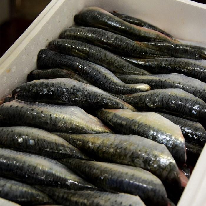 filets de sardine en coupe butterfly
