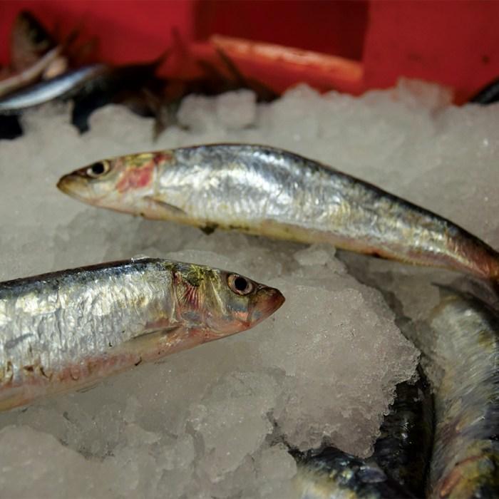 sardine ceylan sur glace pilée