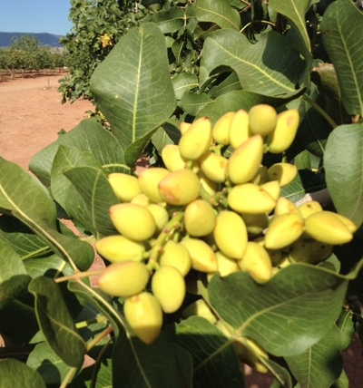 HEART OF THE DESERT PISTACHIOS  WINES  Retail Specialty