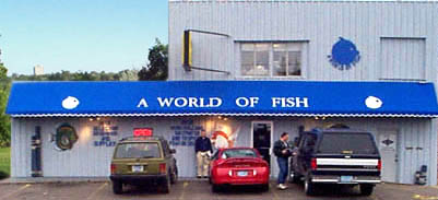 A World Of Fish Fish Aquarium Pet And Fish