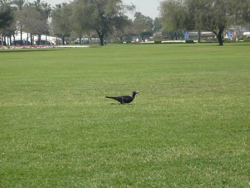 Al Safa Park in Dubai, UAE (1/6)