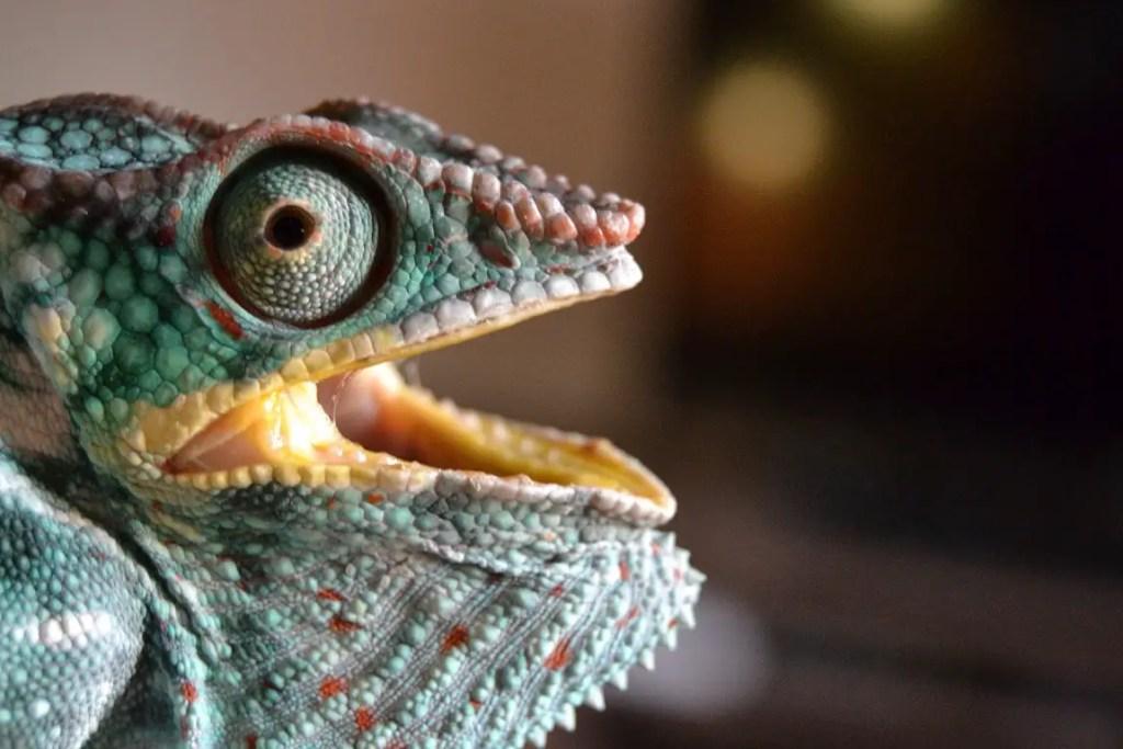 chameleon mouth