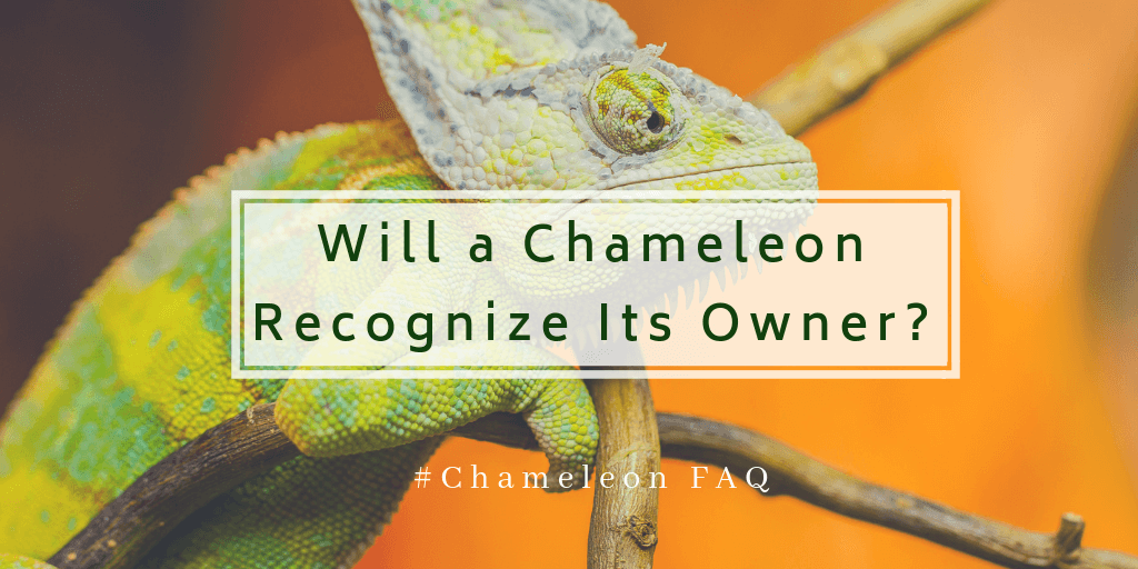 Will a Chameleon Recognize Its Owner
