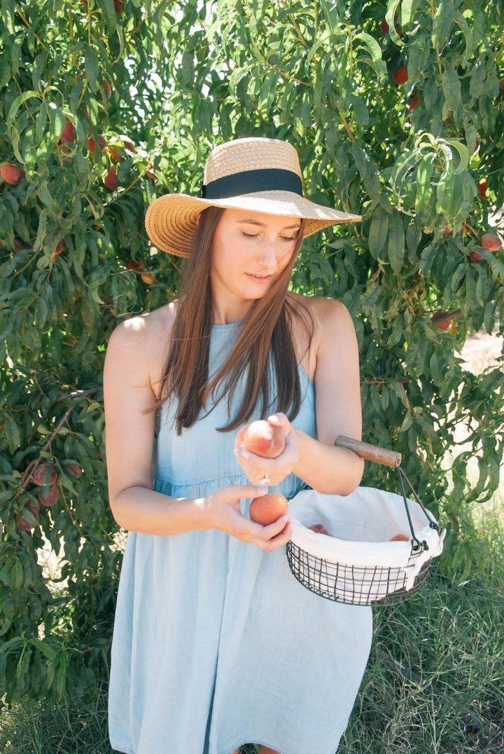 Peach Picking in Arizona
