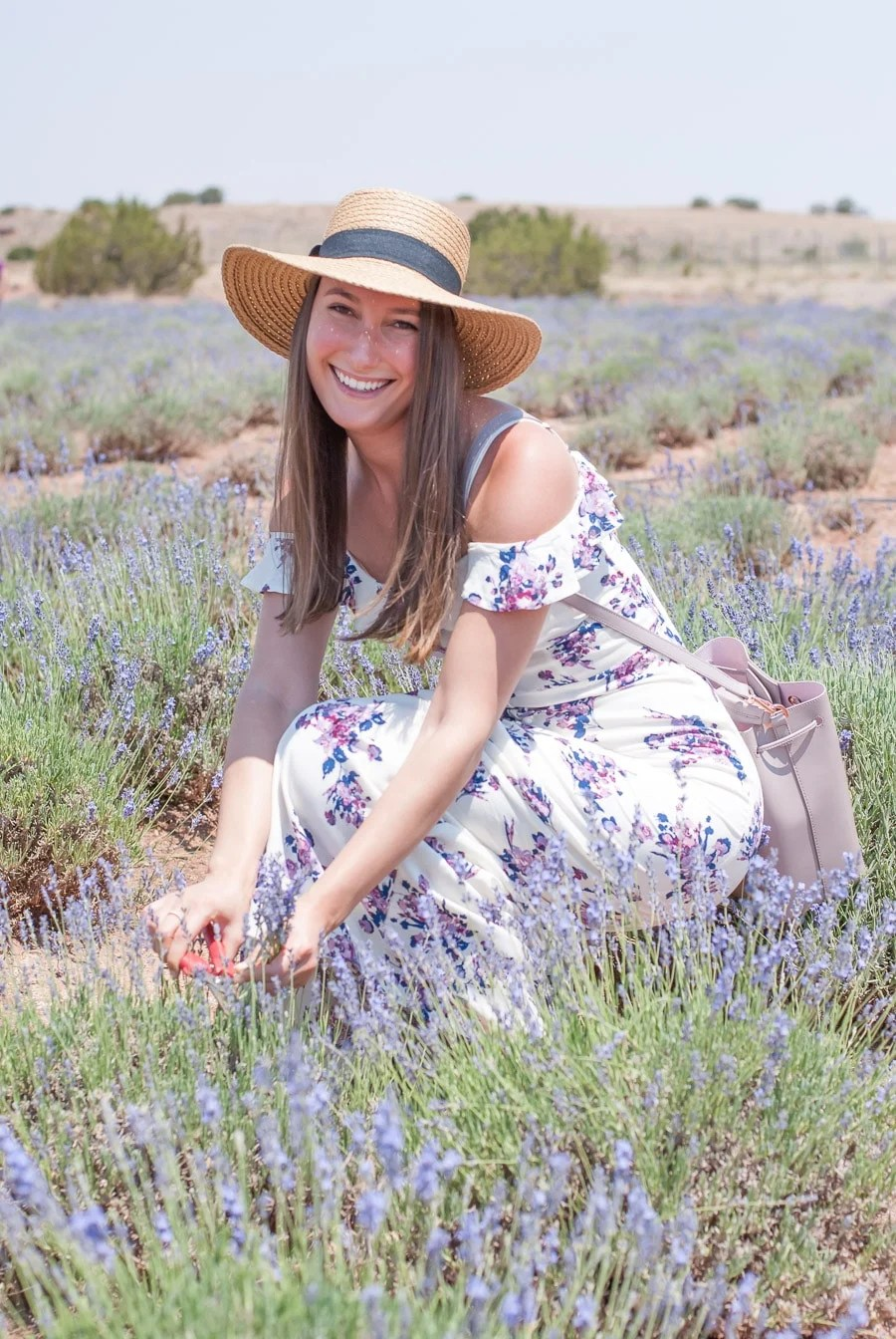 Gathering Culinary Bouquets at the Arizona Lavender Festival