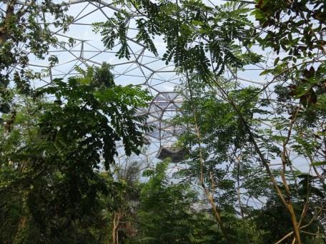 Rainforest biome interior Photo: PK Read