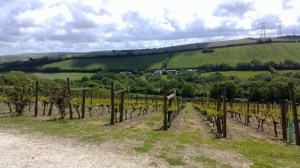 Camel Valley Vineyard Bodmin, Cornwall Photo: PK Read