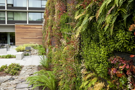 Living wall of Hotel Modera, Portland, Oregon.  Photo: Mike Davis/The Oregonian