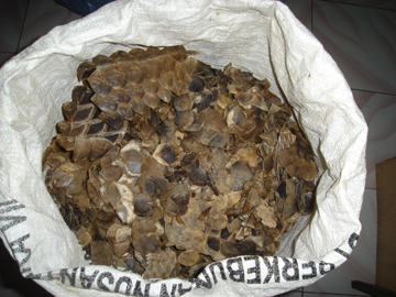 Pangolin scales for sale Photo: TRAFFIC