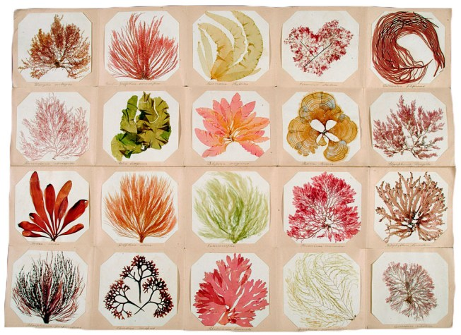 Seaweed collection circa 1850 Source: Collector's Weekly