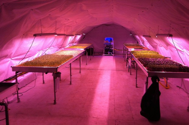 The underground test farm, lit by LED lights. Source: Zero Carbon Food