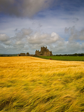 Cistercian Dunbrody Abbey (1182) beyond Barley Field, County Wexford, Ireland Photo: Artflakes