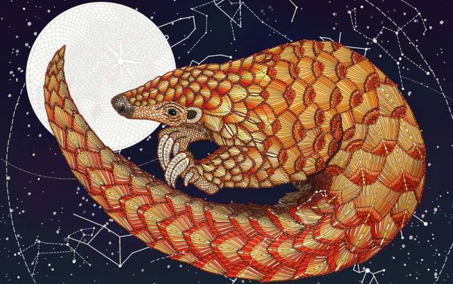 Pangolin Illustration: Claire Scully via Aeon (with an interesting discussion of pangolins and physics)