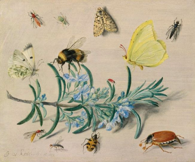 A still life study of insects on a sprig of rosemary.  Jan van Kessel the Elder (Antwerp 1626 – 1679) Source: Alain R. Truong