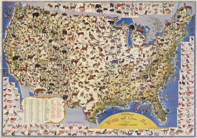 Pictorial Wildlife & Game Map of the United States (1956) Click to enlarge. Source: Shorewood Press