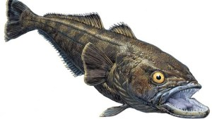 Patagonian toothfish. Image: Reuters