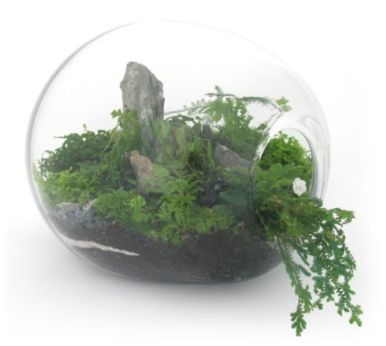 Jeffrey James terrarium. Photo: Jeffrey James