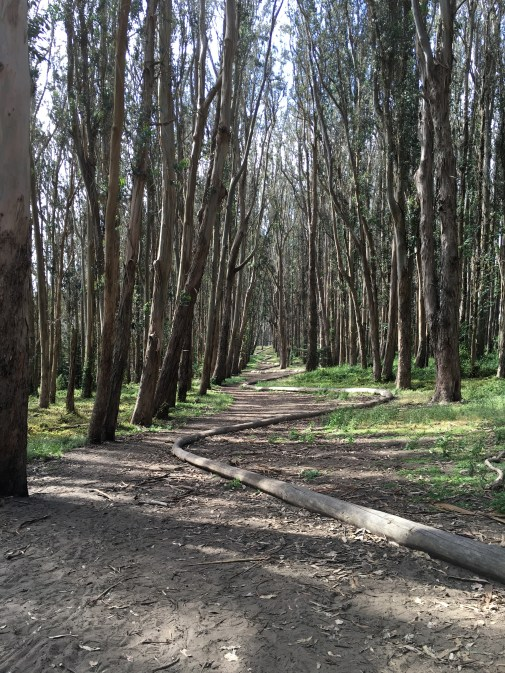 Wood Line (2011) by Andy Goldswrorthy leads through an upper forest path. Photo: PKR