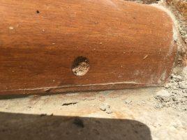 bees, urban gardening, conservation