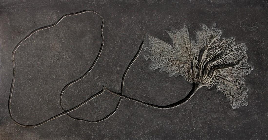 Fossil flowers, sea lily, urbangardening